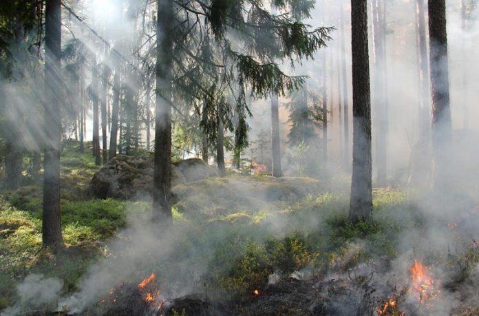 seguro incendios forestales